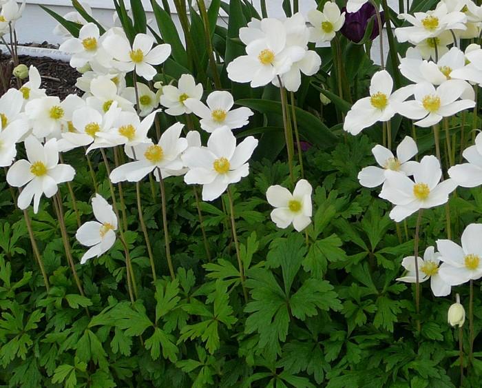 Perennial Plant Association