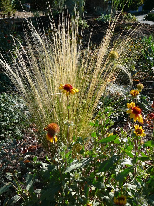 Image Result For How To Start A Native Garden