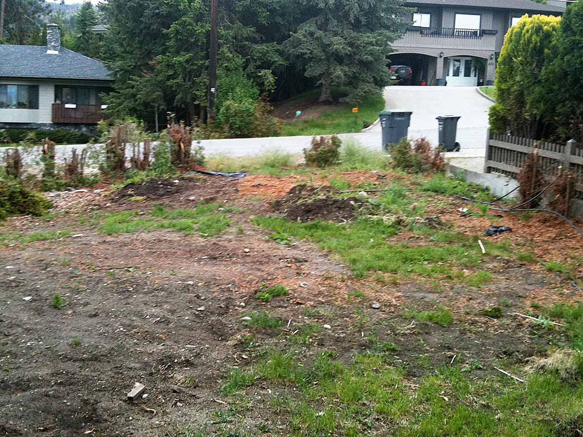 Achenbach lawn and cedars being removed