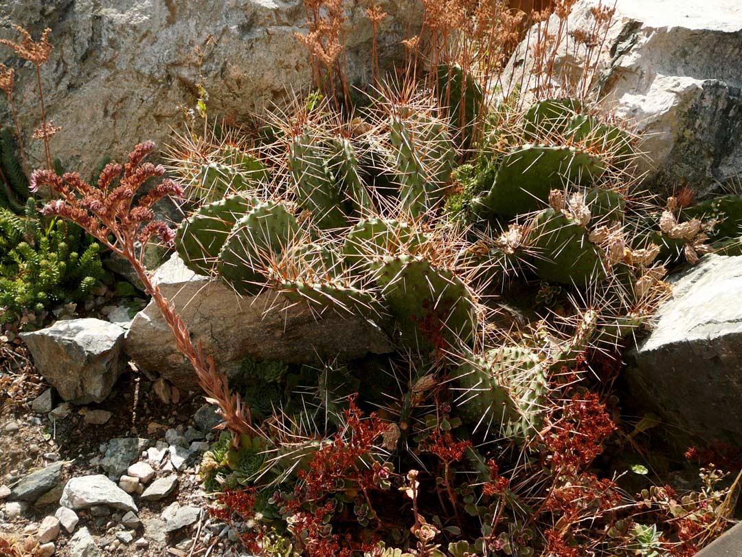 Younberg Garden xeriscape cactus
