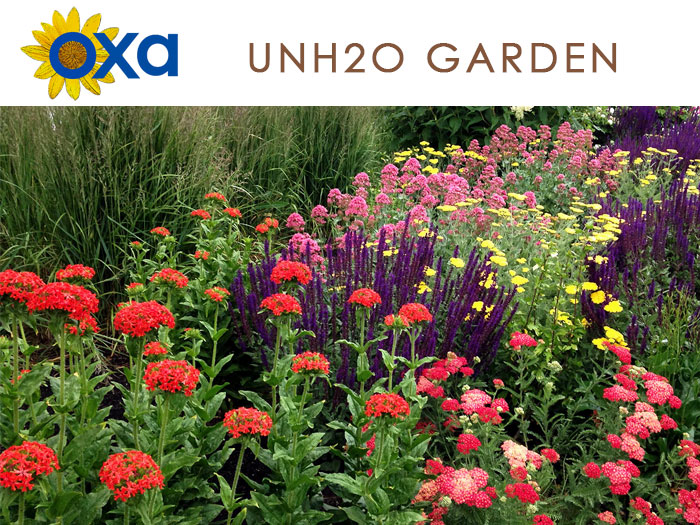 Link to the UnH2O Demonstration Gardens in Kelowna