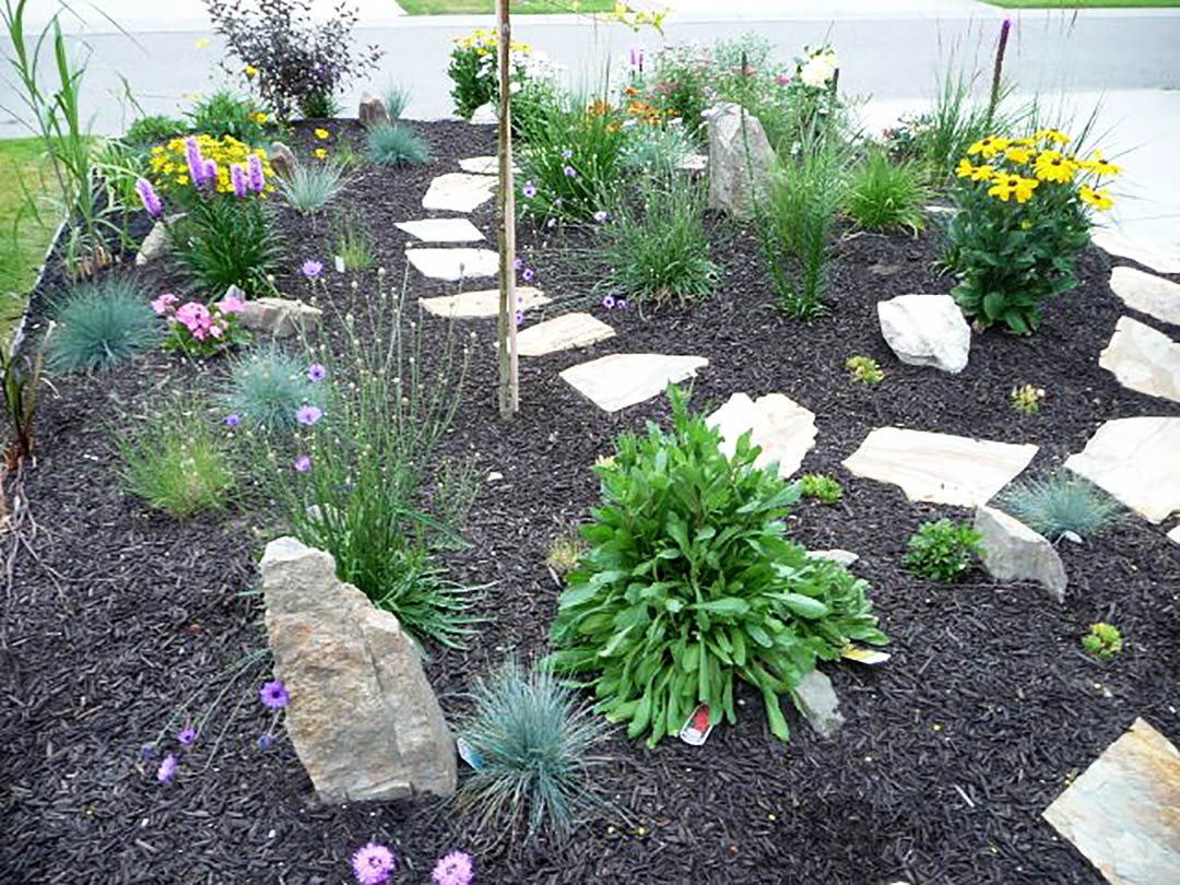 plant selection for xeriscape garden