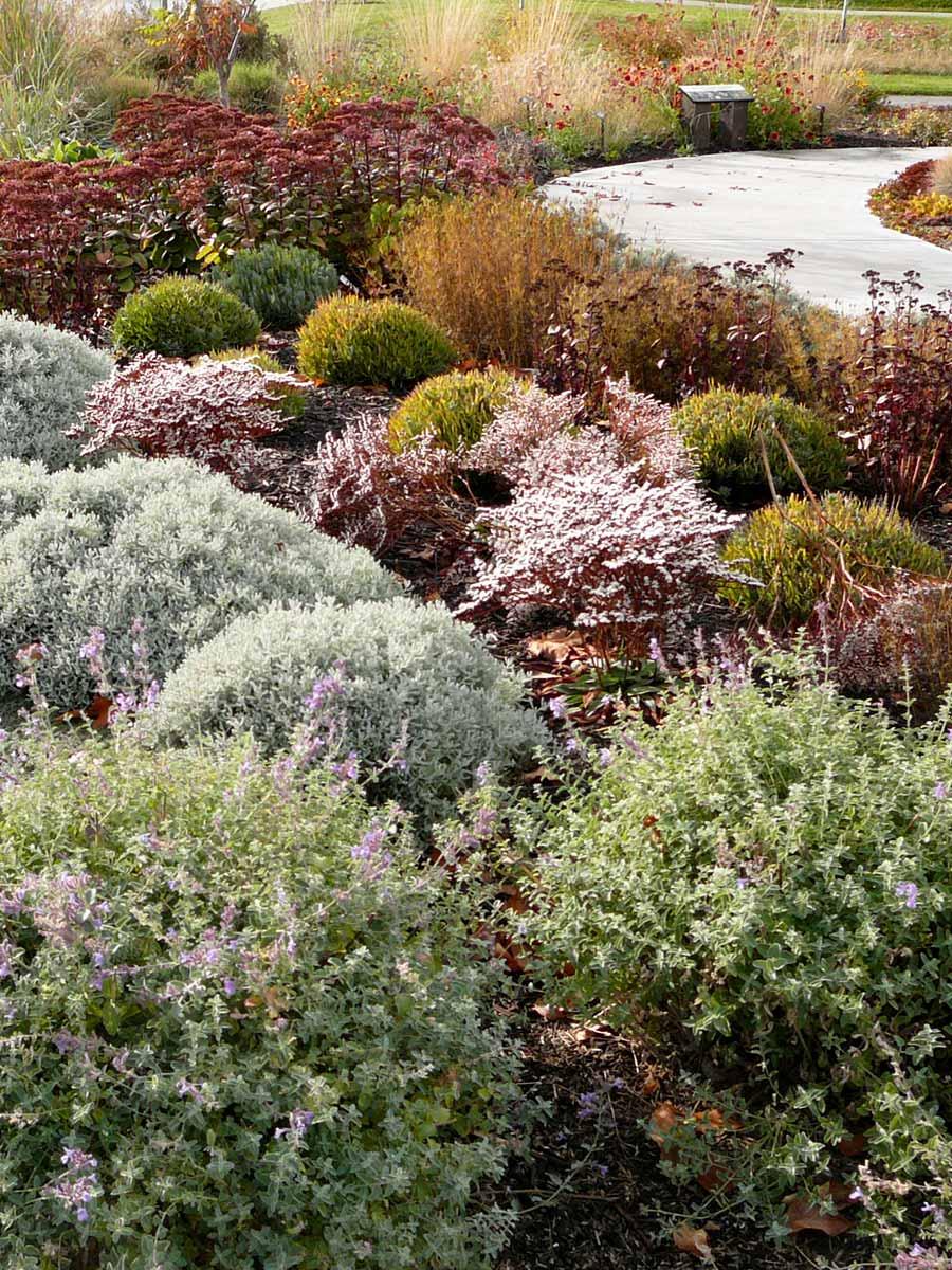 Zauschneria califonica in the OXA xeriscape gardens September