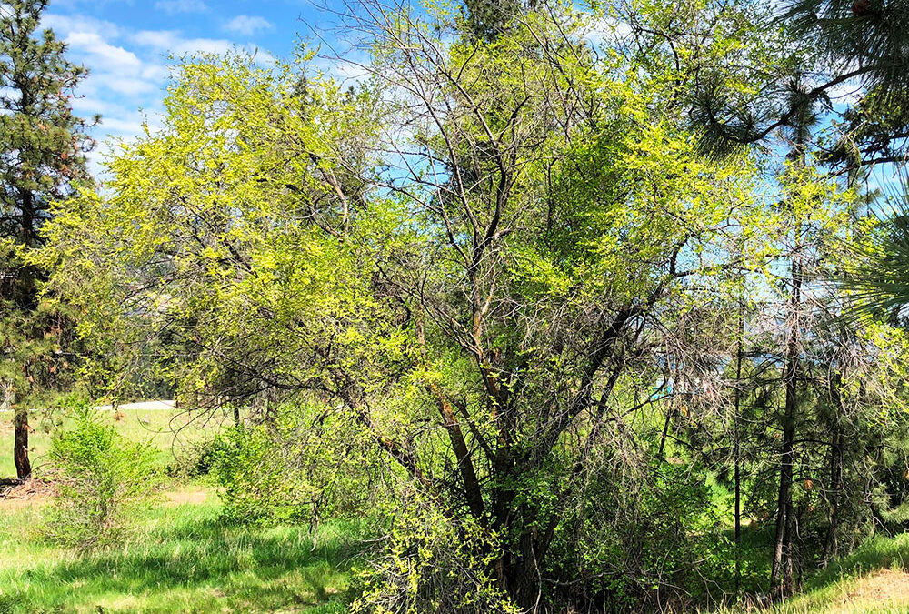 Additional Commentary on Invasive Plants