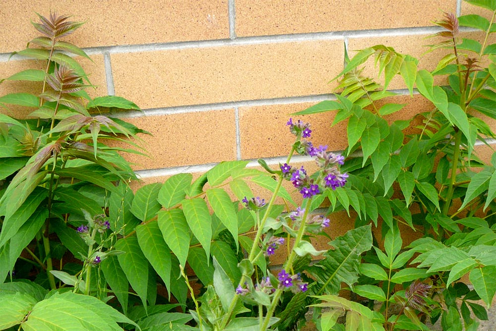Reduce Maintenance by Removing Noxious Weeds