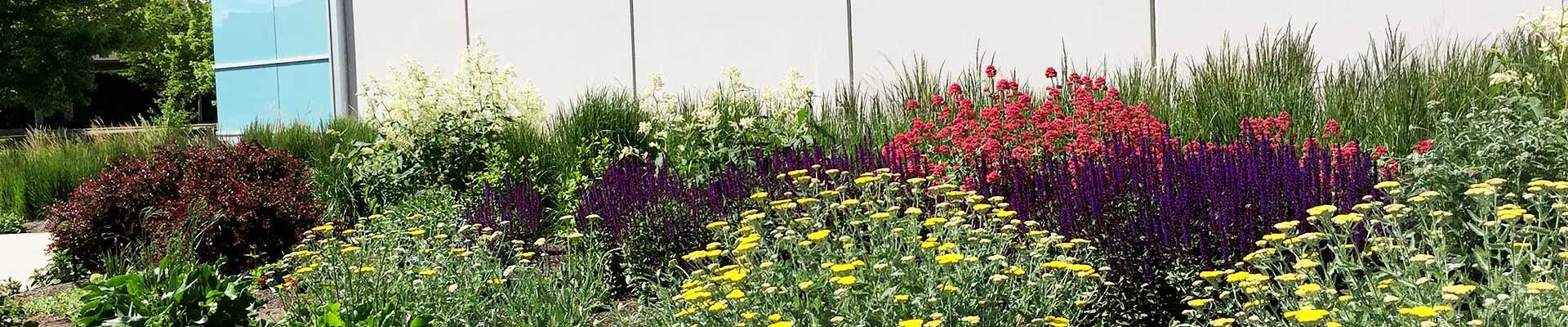 the Okanagan Xeriscape Association UNH20 Garden project June 2020