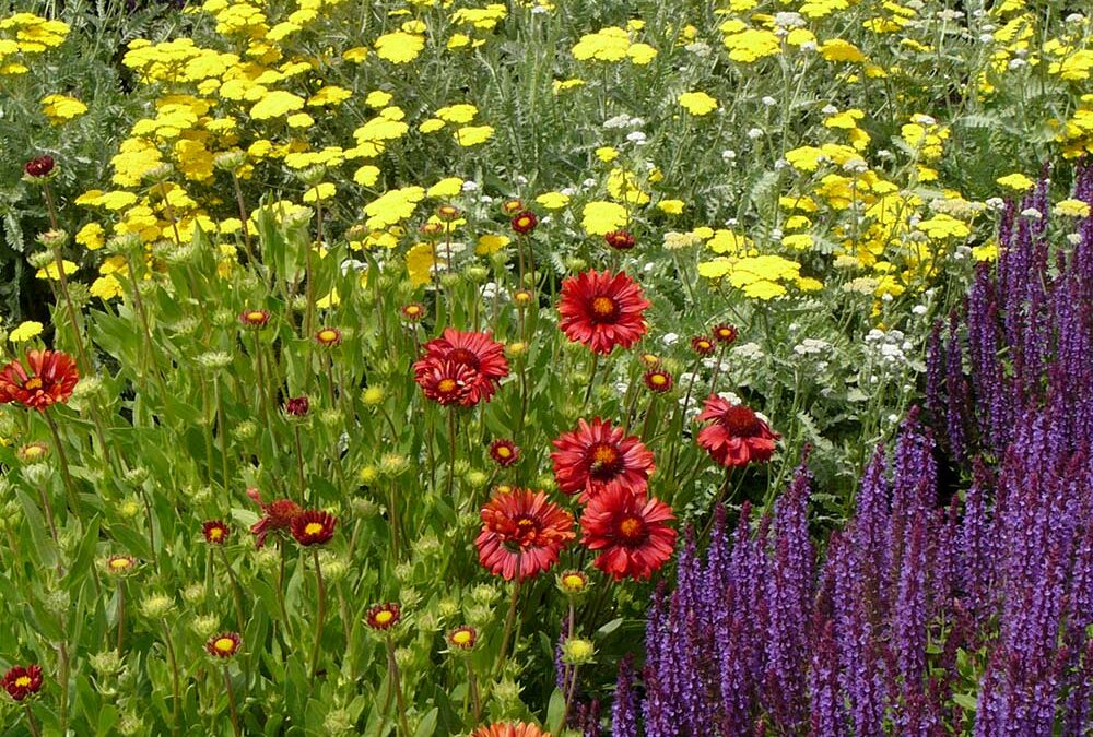 Get the Most from your Perennials