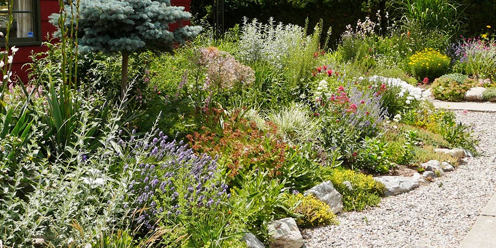 an informal xeriscape garden design
