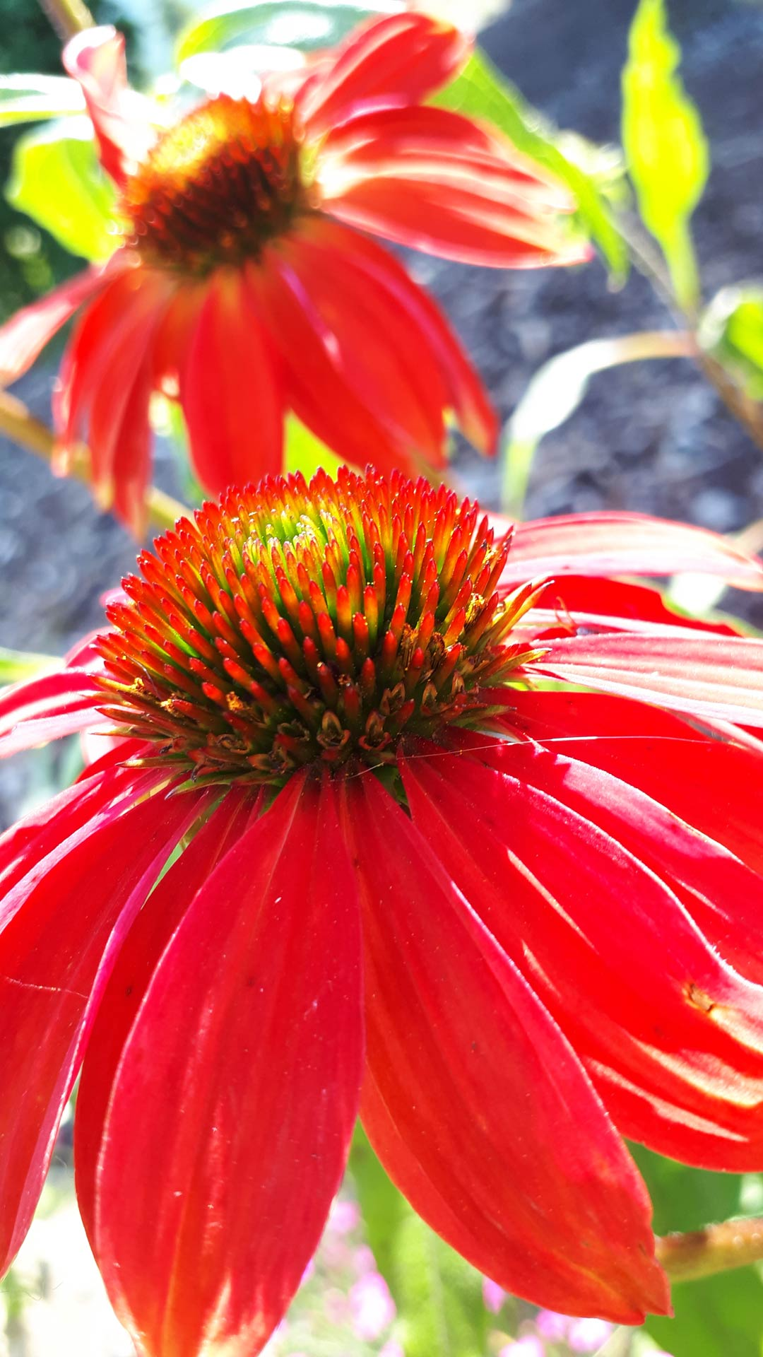 Tip of the month for Okanagan Xeriscape Organisation