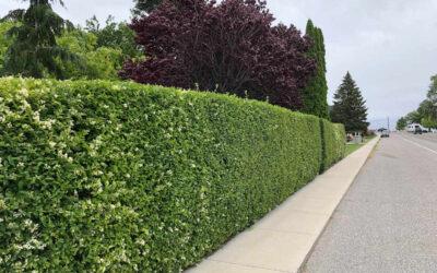Hedge Alternatives- Part 2