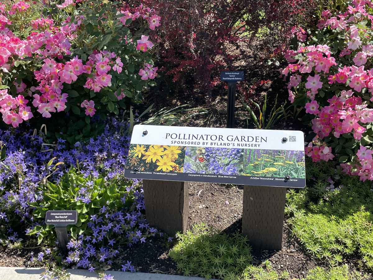Pollinator Garden in the UnH2O Demonstration Garden in Kelowna